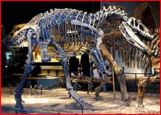 Allosaurus Enchanted Learning Software