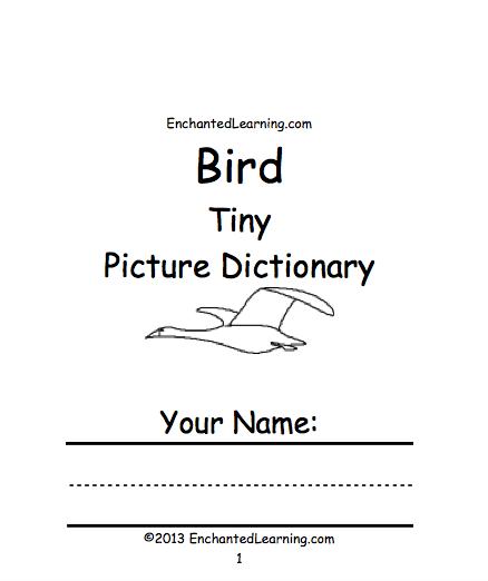 Birds In The Classroom