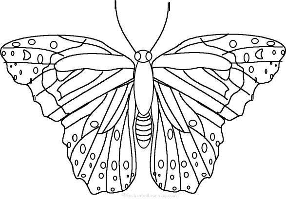 Free Worksheets symmetry butterfly worksheet : Butterfly: Fact or Opinion?, A Worksheet ...