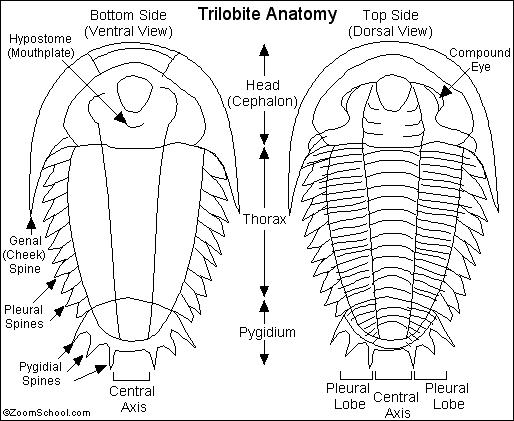 during what period were the fossils in layer d formed The fossils of organisms that were widely distributed but only lived during a short period  layer in the diagram below was formed  d these marine fossils were.