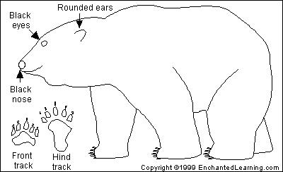 click on a region in the picture to color it in with the selected color Polar Bear and Kodiak Bear Grizzly Bear Black Bear Polar Bear