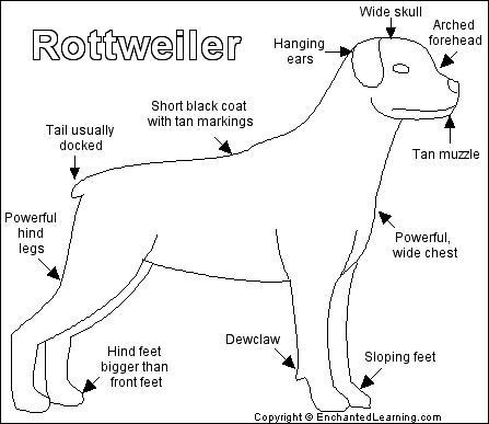 Rottweiler Printout EnchantedLearningcom
