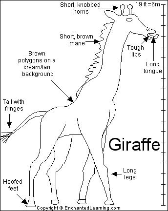 click on a region in the picture to color it in with the With giraffe diagram