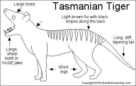 Tasmanian Tiger Printout EnchantedLearning