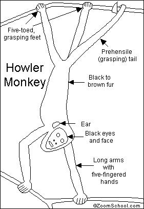 Click on a region in the picture to color it in with the for Howler monkey coloring page