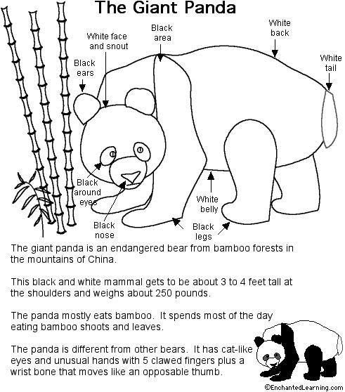 Panda Printout Detailed And Labeled Enchantedlearning Com