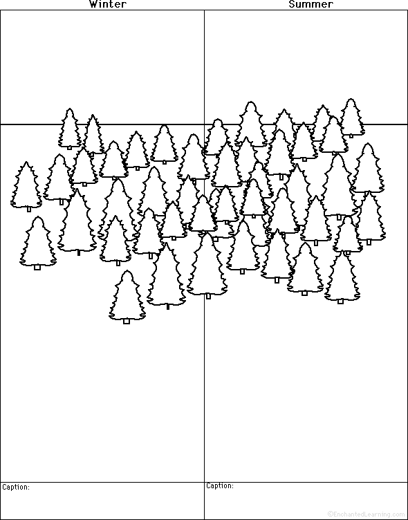 Easy Forest Tree Drawing Draw a Forest Winter And