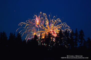Fireworks Behind the Trees of Bellevue