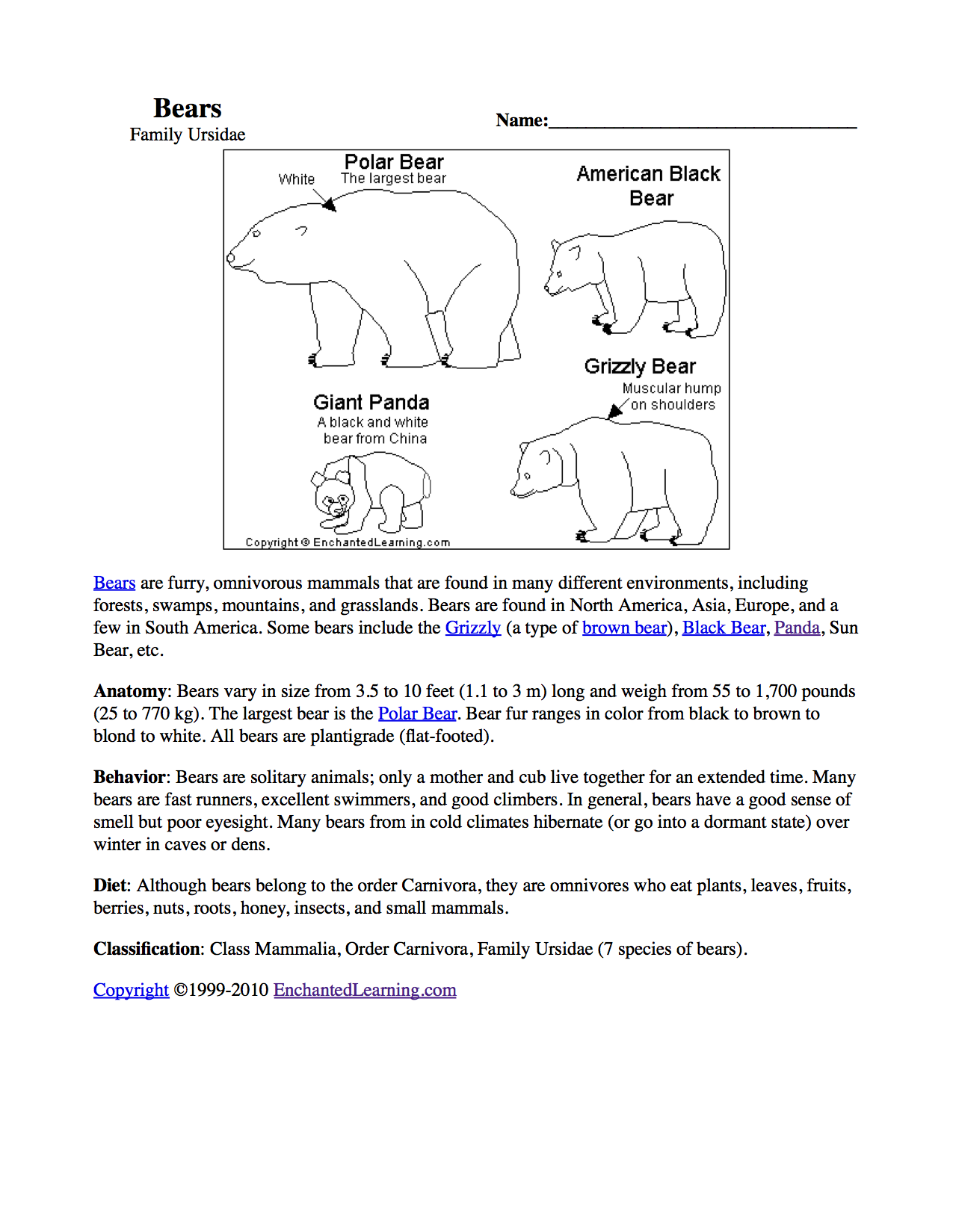 similiar panda bear life cycle coloring diagram keywords polar bear life cycle diagram for kids pandas at enchantedlearning com