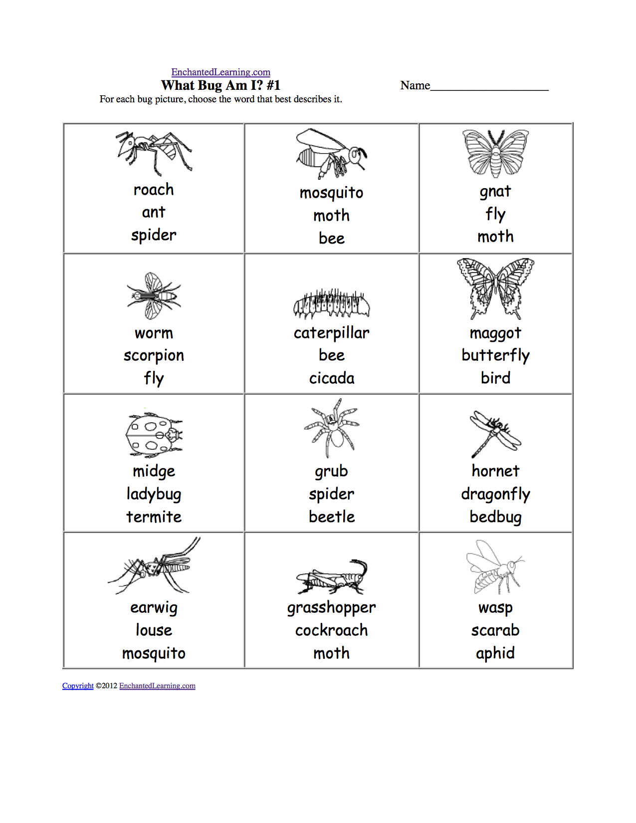 Printables Free Insect Worksheets insects at enchantedlearning com