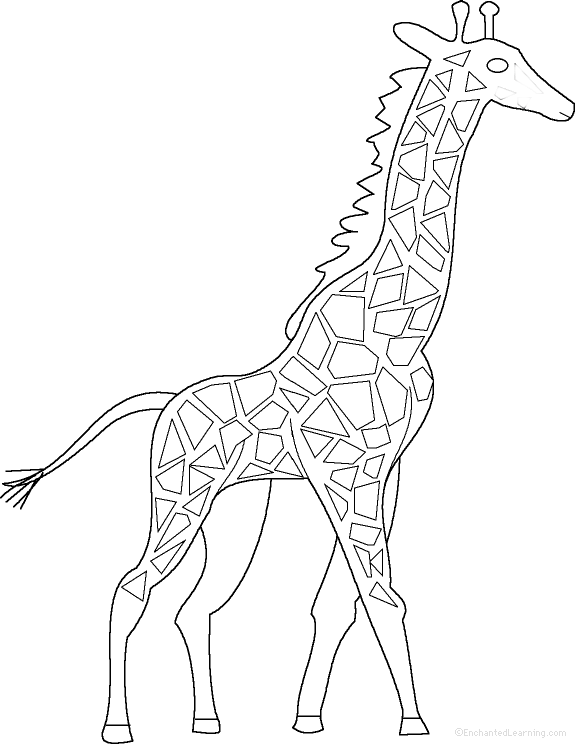Printable Giraffe Diagram