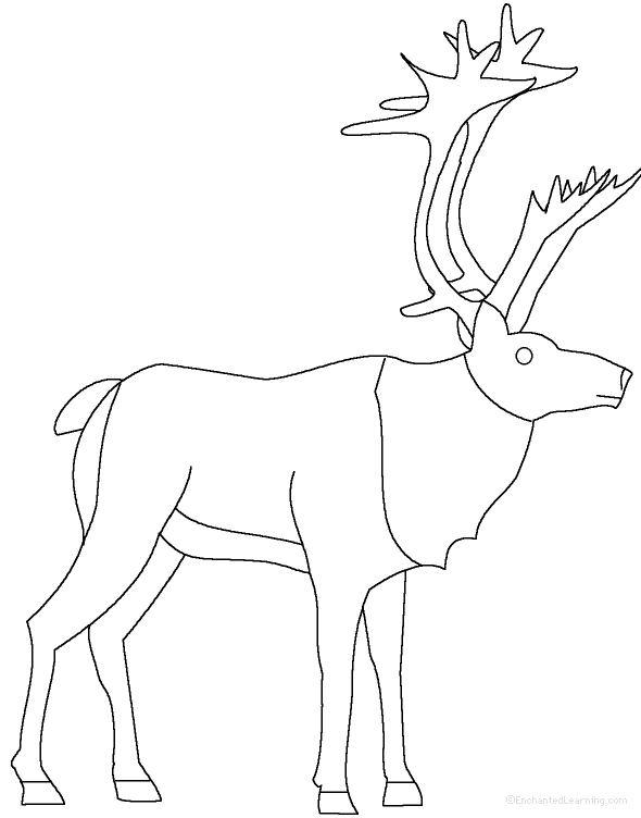 reindeer reindeer at enchantedlearning com