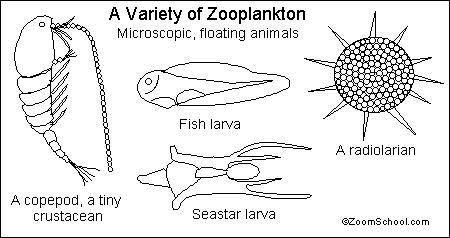 sea plankton coloring pages - photo#20