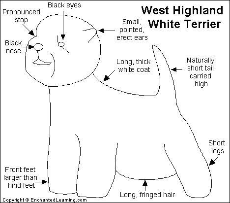 West Highland White Terrier Printout Enchantedlearning Com