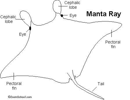 manta ray enchanted learning software. Black Bedroom Furniture Sets. Home Design Ideas