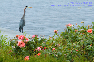 A Great Blue Heron on a Flowery Summer Day