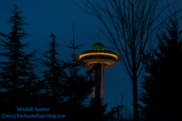 Space Needle through the Trees