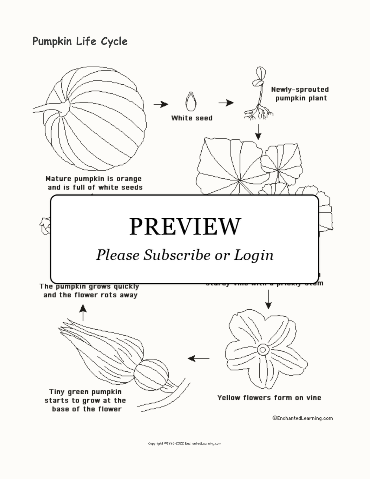 Pumpkin Life Cycle interactive printout page 1